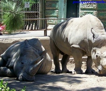 zoo-palermo-buenos-aires-9