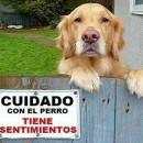 cuidado-con-el-perro