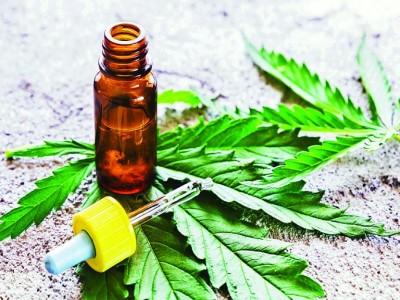 27 de Julio-Por primera vez el cannabis tendrá su lugar en Feria de la Rural