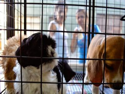 05 de Septiembre-Prohíben en la Ciudad de Buenos Aires la exhibición de animales en las vidrieras de los comercios para su venta