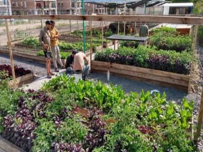 04 de Diciembre-Aprueban una ley para la promoción y difusión de la agricultura urbana en la Ciudad_